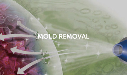 Bactronix Mold Removal